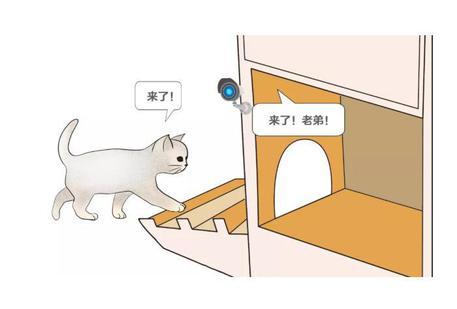 Sviluppato in Cina il rifugio per gatti che sfrutta l'intelligenza artificiale