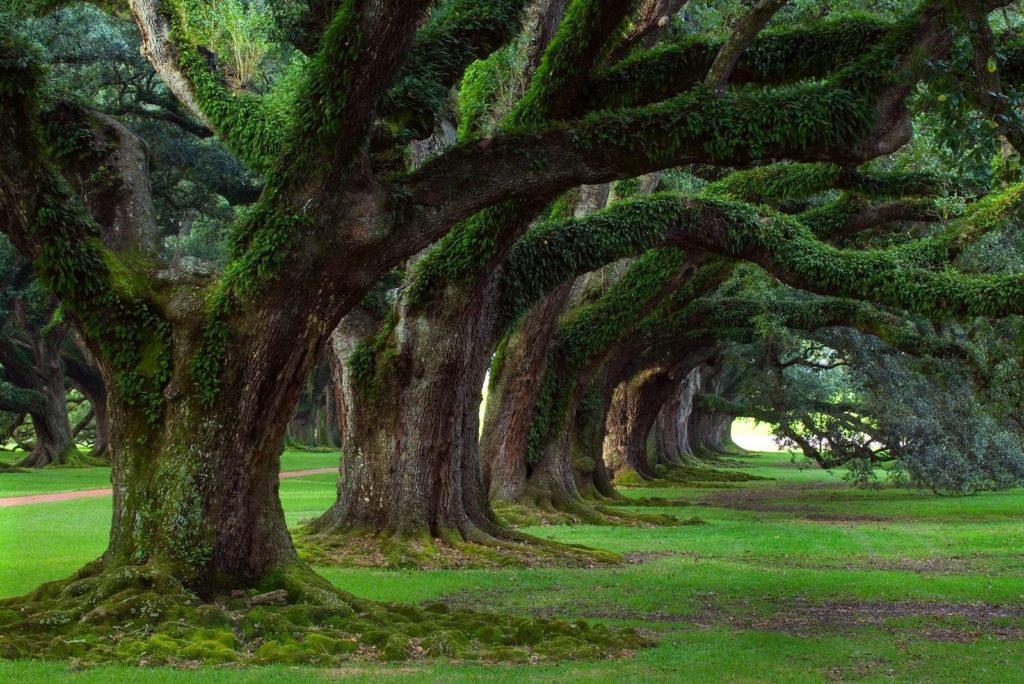 Glowing Trees: il futuro è degli alberi
