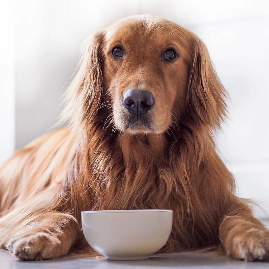 Nuova startup che vende cibo per i cani