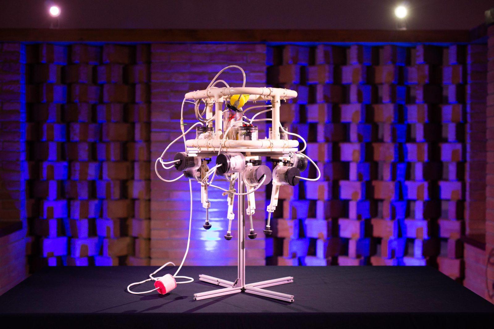 robot granchio per articolo su blue revolution
