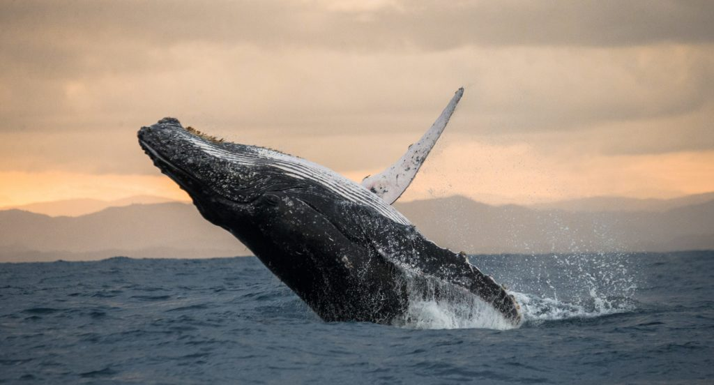 balena per articolo sulle balene a new york