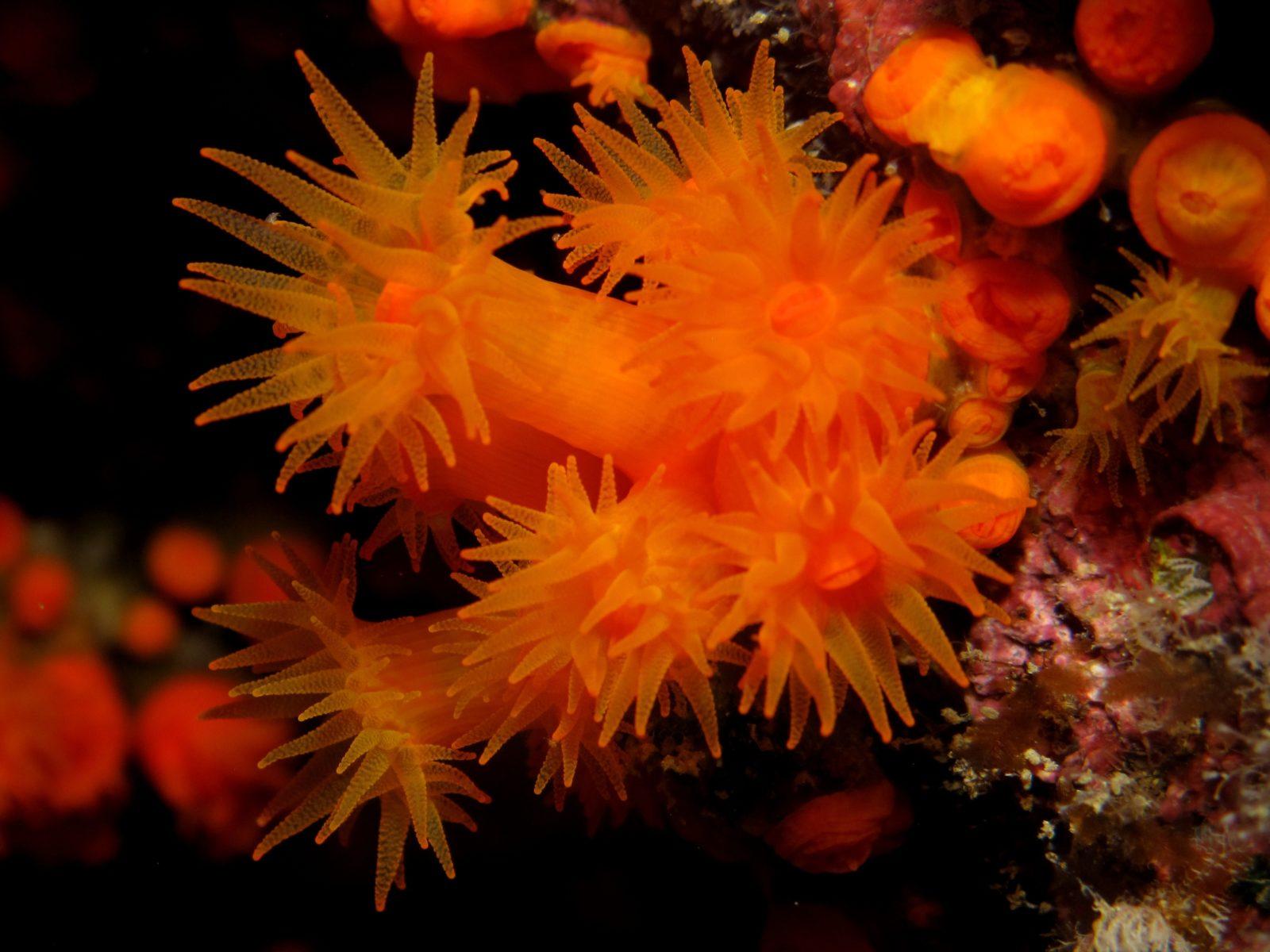 coralli per articolo sulla plastica ingerita dai coralli